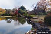 紅葉飄飄15日東京自由行--我在小石川植物園:15●這座古典味十足的漂亮池塘,像是盛裝出席在植物園中的美女,用絕代風華的意境,吸引前來的遊人.JPG