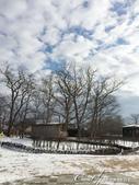 ●2015北海道之旅:●枯樹藍天與白雪.jpg