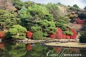 紅葉飄飄15日東京自由行--我在小石川植物園:23●當然,欣賞美麗的風景一定少不了沿著池子漫步一圈.JPG