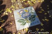 紅葉飄飄15日東京自由行--大学通り:12●國立市號稱是牽牛花的故鄉,每年會在這條大道和一橋大學正門南側一帶舉行花市,展示販賣多樣品種的牽牛花,掀