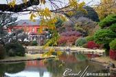 紅葉飄飄15日東京自由行--我在小石川植物園:27●當然,欣賞美麗的風景一定少不了沿著池子漫步一圈.JPG