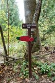 2018加拿大四年一度鮭魚洄遊V.S.洛磯山脈國家公園健走趣(5-2)--鮭魚迴游生態奇觀:01●循著樹林深處的指標,尋找鮭魚的蹤跡.JPG