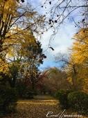 紅葉飄飄15日東京自由行--閃耀著童話森林般迷人色彩的小石川植物園:33●無論是金黃色的康莊大道,或是帶點遐想通往未知的枯黃色林蔭,園區內處處都精采.JPG