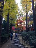 大田黑公園入口處長長的銀杏並木道:05.JPG