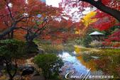 紅葉飄飄15日東京自由行--日比谷公園 :02●繞著雲形池賞楓光.JPG