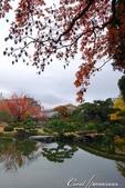 紅葉飄飄15日東京自由行--清澄庭園:28●欣賞池中的魚、水上的鴨和倒映在水中的樹,是來此庭園的一大樂事07.JPG