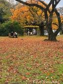 紅葉飄飄15日東京自由行--閃耀著童話森林般迷人色彩的小石川植物園:34●經過了園區內小小的、但非常溫馨的飲食區,無論有沒有點購飲食,工作人員都歡迎你找個地方歇坐.jpg