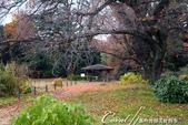 紅葉飄飄15日東京自由行--我在小石川植物園:53●幾抹綠,為秋天增添不一樣的色彩.JPG