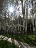 2019Amazing!穿越古絲路上的中亞五國之旅(4-5)--吉爾吉斯斯坦之伊塞克湖渡假村:05●步行於通往湖邊的步道上,沿途的松樹、雲杉、樺樹與各種灌木、花卉,個個筆直挺立,熱情提供迎賓的馨香與氛圍