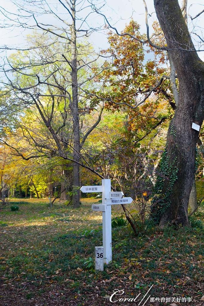 紅葉飄飄15日東京自由行--我在小石川植物園:02●朝著指標方向,踏著石階,穿過與上半場風情截然不同的林蔭,前往日式庭園.JPG