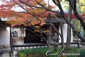 紅葉飄飄15日東京自由行--大田黑公園:20●園中聚集了多種日式庭園的要素,包括池塘、溪流、假山、小橋、樹林、展館及茶屋,構成了細緻且繁複的迴游式庭