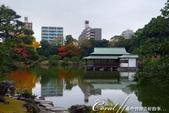 紅葉飄飄15日東京自由行--清澄庭園:33●池中,營造出濃濃日式風情的茶屋.JPG