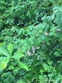 萍水相逢˙有志一同--初秋記遊之神鍋高原:●雨水洗滌萬物,帶來滋潤與養份,當這麼想時,心情就變好了.JPG