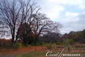 紅葉飄飄15日東京自由行--我在小石川植物園:56●餘光中的來時路,目送我離開植物園.JPG