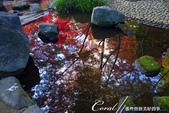 紅葉飄飄15日東京自由行--大田黑公園:12●秋的紅葉,將池畔點綴到近乎夢幻的境界.JPG