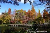 紅葉飄飄15日東京自由行--井之頭恩賜公園:09●自1917年開園,已有100年的井之頭恩賜公園,以紅葉美景和春櫻征服造訪遊人的心.JPG