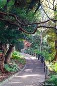 紅葉飄飄15日東京自由行--我在小石川植物園:06●朝著指標方向,踏著石階,穿過與上半場風情截然不同的林蔭,前往日式庭園.JPG
