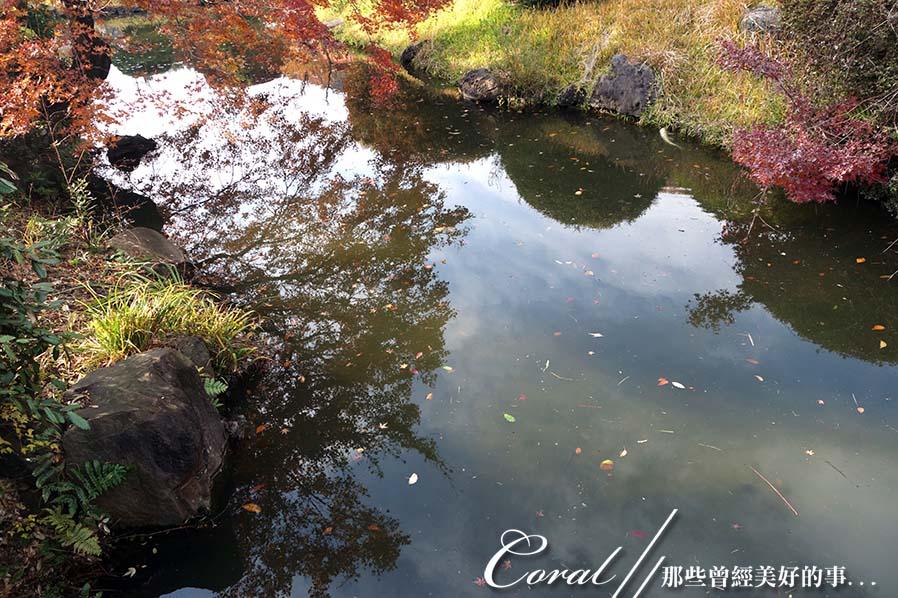 紅葉飄飄15日東京自由行--我在小石川植物園:12●被繽紛色彩環抱著的一池靜靜地、盛裝著零星落葉,及倒影著天空的秋水於小徑的盡頭映入眼簾.JPG