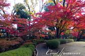 大田黑公園內的美麗楓情畫:DSC06935.JPG