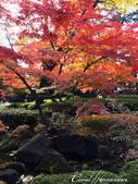 大田黑公園內的美麗楓情畫:IMG_2882.JPG