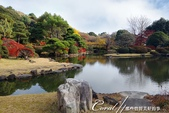 紅葉飄飄15日東京自由行--我在小石川植物園:14●這座古典味十足的漂亮池塘,像是盛裝出席在植物園中的美女,用絕代風華的意境,吸引前來的遊人.JPG