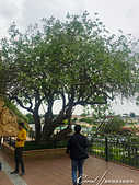 2019Amazing!穿越古絲路上的中亞五國之旅(14-4)--烏茲別克斯坦之聖丹尼爾陵墓:05●在陵墓和隱士洞前有一棵非常傳奇的古老開心果樹.JPG