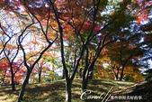 殿ヶ谷戸庭園的深秋楓葉,如火如荼、如烈燄灼燒一般無窮盡的美麗:07.JPG