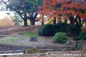 紅葉飄飄15日東京自由行--國營昭和紀念公園:45●很快地;藍天收起它的顏色,光線也漸暗下來.JPG