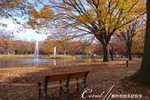 紅葉飄飄15日東京自由行--代代木公園:23●長椅上;有我今生最難忘的秋的回憶.JPG
