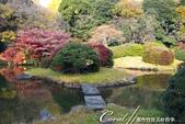 紅葉飄飄15日東京自由行--我在小石川植物園:17●這座古典味十足的漂亮池塘,像是盛裝出席在植物園中的美女,用絕代風華的意境,吸引前來的遊人.JPG