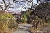 紅葉飄飄15日東京自由行--雖滿園蕭瑟卻也難掩風雅的向島百花園:16●園區內的秋之姿色.JPG