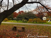 坐在小石川植物園內的樹下賞秋吧:07.JPG