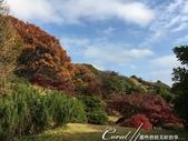 紅葉飄飄15日東京自由行--我在小石川植物園:30●當然,欣賞美麗的風景一定少不了沿著池子漫步一圈.JPG