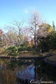 紅葉飄飄15日東京自由行--雖滿園蕭瑟卻也難掩風雅的向島百花園:21●由自然沼澤形成意趣橫生的池塘邊,佈滿應景的秋天植物,連芒草也看起來具有詩意01.JPG