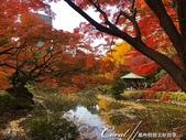 紅葉飄飄15日東京自由行--日比谷公園之美不勝收雲形池:●紅葉、涼亭、水波倒影,人生必訪一次的美景.JPG