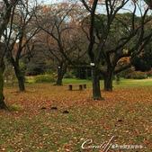 坐在小石川植物園內的樹下賞秋吧:09.JPG