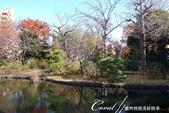 紅葉飄飄15日東京自由行--雖滿園蕭瑟卻也難掩風雅的向島百花園:21●由自然沼澤形成意趣橫生的池塘邊,佈滿應景的秋天植物,連芒草也看起來具有詩意05.JPG