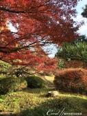 紅葉飄飄15日東京自由行--我在小石川植物園:38●池邊也有不少可以歇坐的地方.JPG