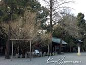 2017關東10日樂得自在:●左邊那棵銀杏樹,是1933年由皇妃親手種下,相傳女性觸摸這棵銀杏樹就可治好所有婦女病.JPG