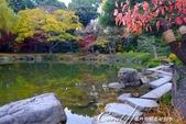 紅葉飄飄15日東京自由行--清澄庭園內的奇石及渡池石塊:09.JPG