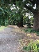 坐在小石川植物園內的樹下賞秋吧:14.JPG