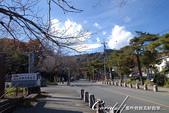 紅葉飄飄15日東京自由行--寶登山尋寶趣:04●沿路兩側的枯樹帶來十足的秋的意境.JPG