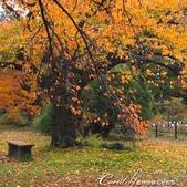 坐在小石川植物園內的樹下賞秋吧:10.JPG