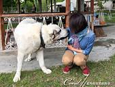 2019Amazing!穿越古絲路上的中亞五國之旅(11-)--土庫曼斯坦之汗血寶馬:05●這隻中亞牧羊犬有多大呢?比例差不多如圖,而且很容易親近人.JPG