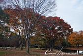 紅葉飄飄15日東京自由行--國營昭和紀念公園:38●秋天的景色,這是四季分明的過度才能享有的極緻體驗.JPG