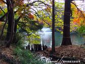 紅葉飄飄15日東京自由行--井之頭恩賜公園:18●湖水、步道、與紅葉所交織成的獨特景色,隨處所至皆有不同意趣.JPG