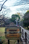 紅葉飄飄15日東京自由行--國營昭和紀念公園:40●秋天的景色,這是四季分明的過度才能享有的極緻體驗.JPG