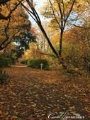 紅葉飄飄15日東京自由行--閃耀著童話森林般迷人色彩的小石川植物園:31●無論是金黃色的康莊大道,或是帶點遐想通往未知的枯黃色林蔭,園區內處處都精采.JPG
