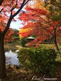 紅葉飄飄15日東京自由行--日比谷公園 :01●似乎,所有美麗的風情與場景都是圍繞著一湖池水,日比谷公園也不例外.JPG