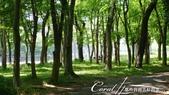 2017初夏14日自由行:●公園樹林間,不少同遊親子在此野餐.JPG